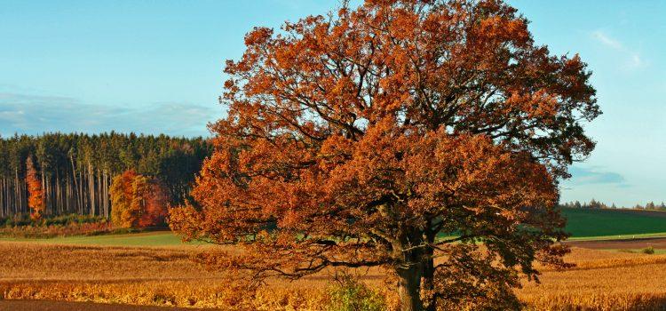 Es wird Herbst in Bayern