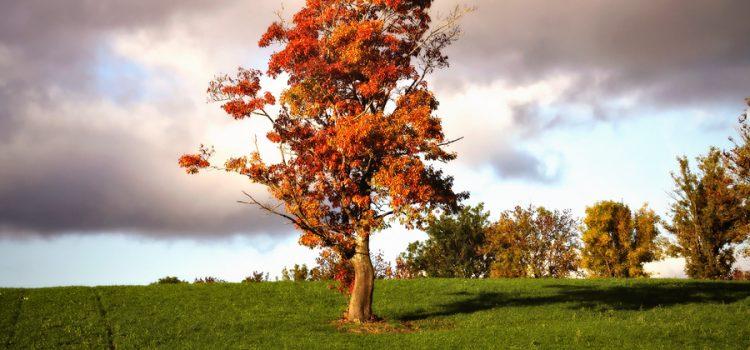 Herbstanfang 2013