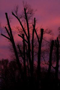 Endloser Sonnenuntergang am Ammersee (c) Günther Strauß